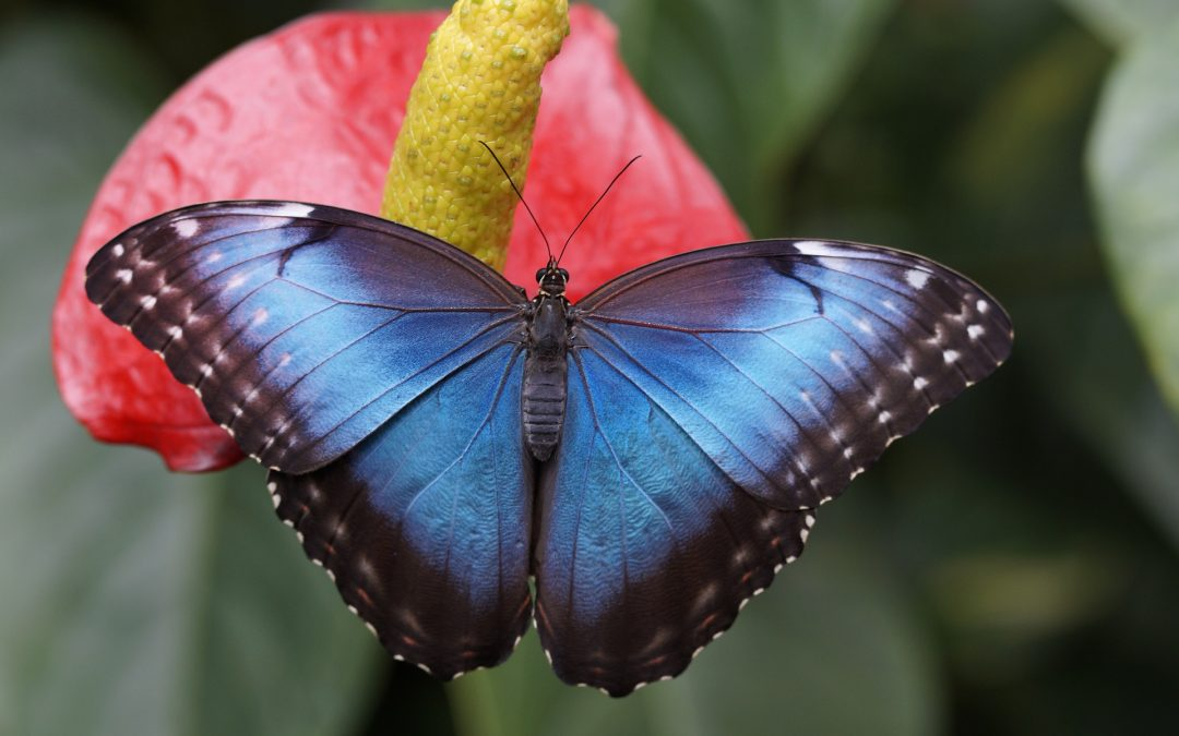 Allow the old caterpillar to die so the new butterfly can fly.